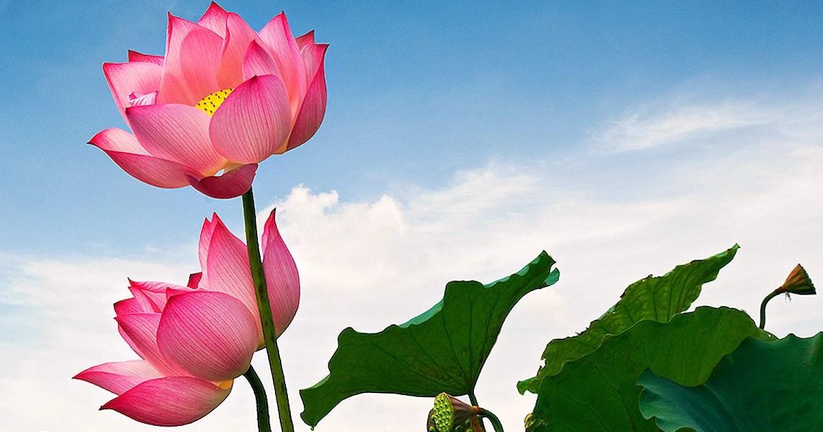 66 câu Phật học làm chấn động thiền ngữ thế giới